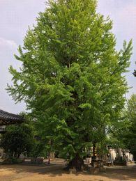 shinmyoji 20140503_01s