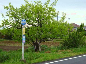 bus stop 20140429_03s