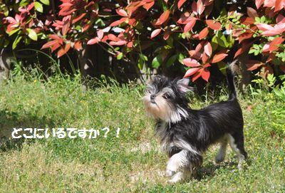 DSC_0040_20140531115735c54.jpg