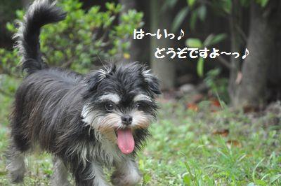DSC_0050_2014072116482437b.jpg