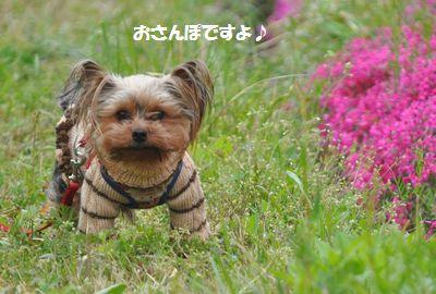 DSC_0242_201404271908357c3.jpg