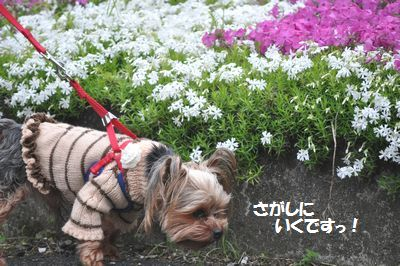 DSC_0275_20140427190853456.jpg