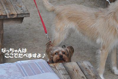 DSC_0543_201403211814410a6.jpg
