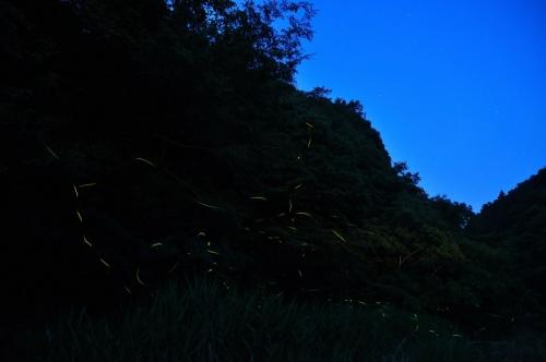 1中山永木ホタル14.05.31