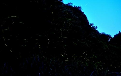 2中山ホタル合成14.05.31