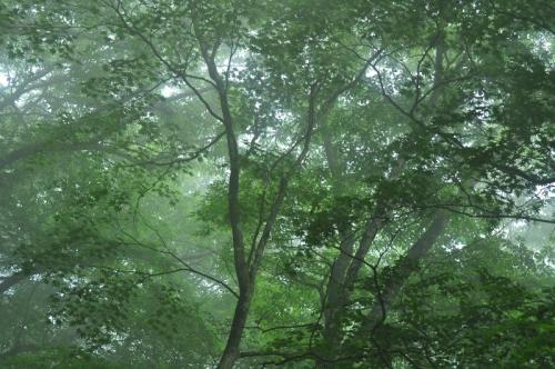 3天狗の森14.06.10