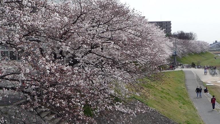2014.03.31asahigawasakura 003