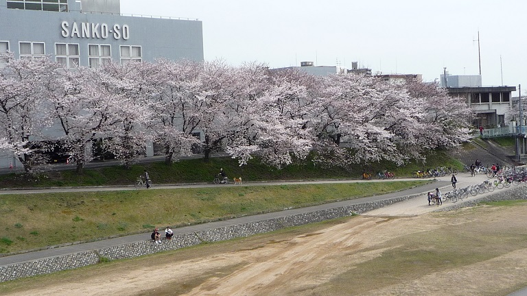 2014.03.31asahigawasakura 002