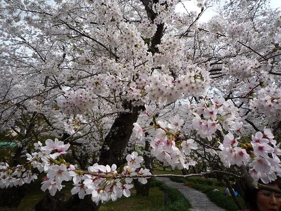 2014.04.03handayama 009