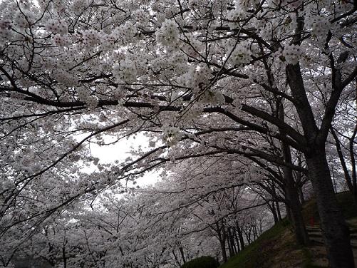 2014.04.03handayama 011