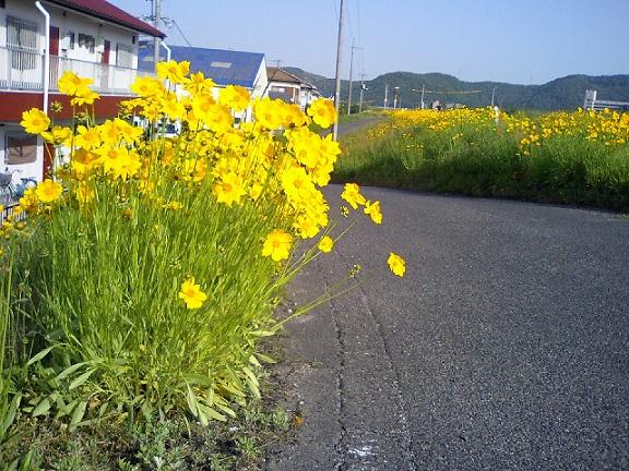 2014.05.19flower 006