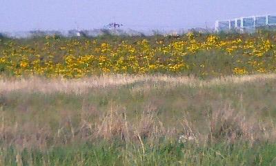 2014.05.19flower 003