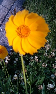 2014.05.19flower 001