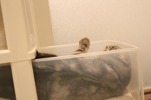 洗面所の攻防4