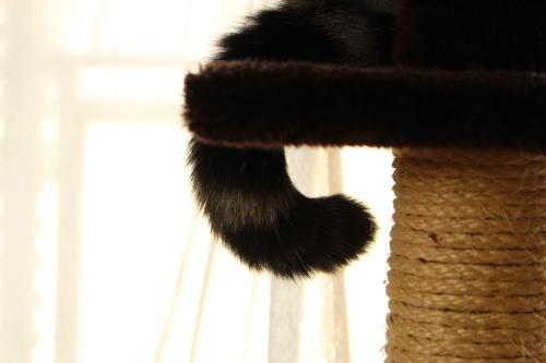 魅力的な尻尾2