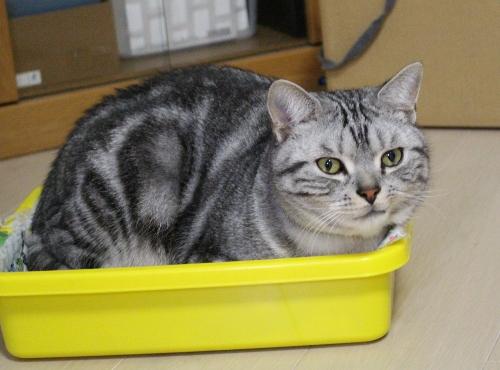 懐かしい箱2