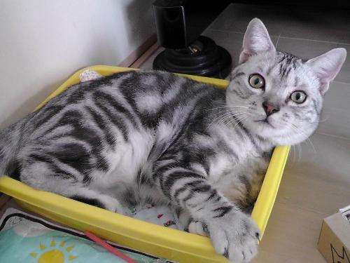 懐かしい箱3