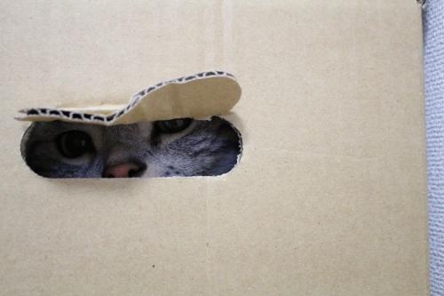 箱の中から3