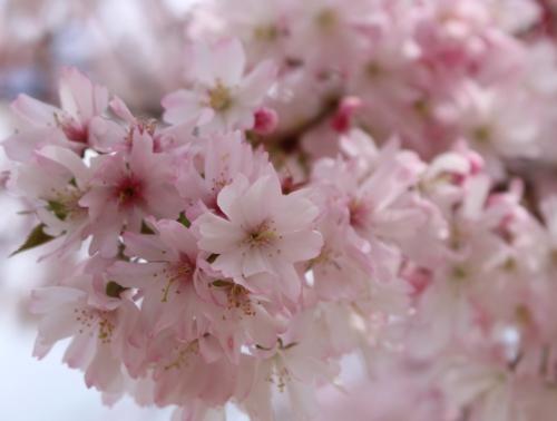 春を満喫3
