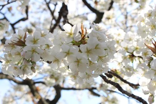 春を満喫7