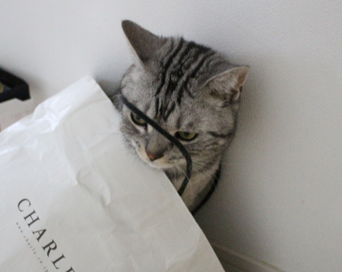 大好き紙袋3