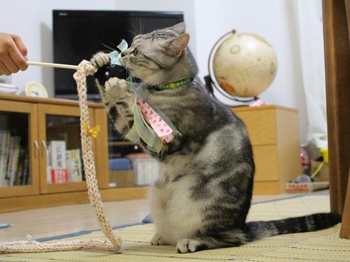 手作り猫じゃらし1