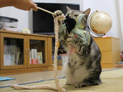 手作り猫じゃらし3