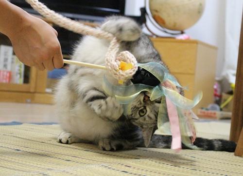 手作り猫じゃらし4