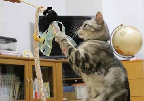 手作り猫じゃらし5