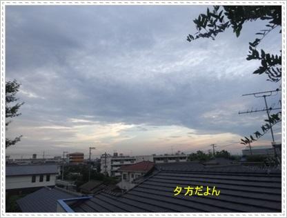 DSC00363_20140716233535ecc.jpg