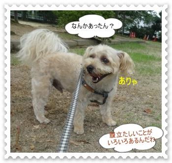 DSC00846_201408080017101aa.jpg