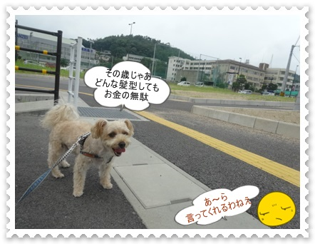 DSC00979.jpg