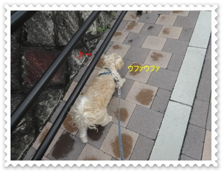 DSC01350_20140827005454b35.jpg