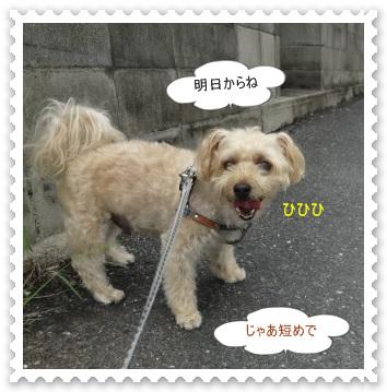 DSC01358_20140827005933fc8.jpg