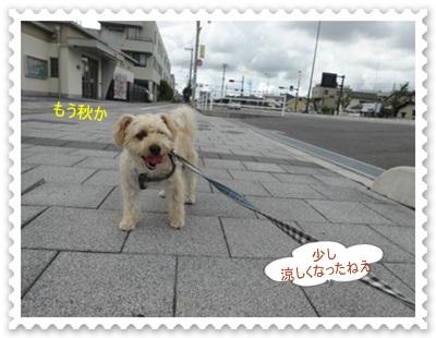 DSC01383_20140828003931ecb.jpg