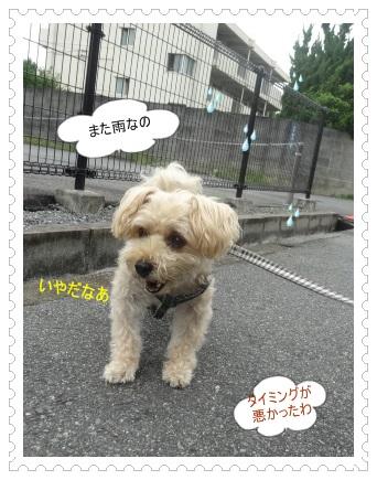 DSC01406_2014082900040276a.jpg