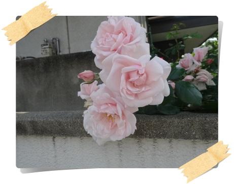 DSC08849.jpg