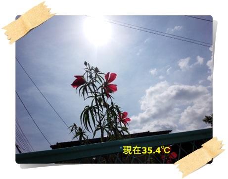 IMG_20140724_100157.jpg