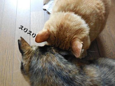14_03_21_1.jpg
