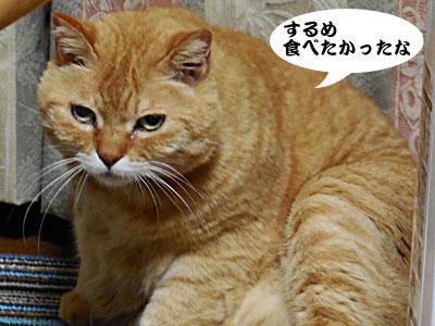 14_03_23_4.jpg