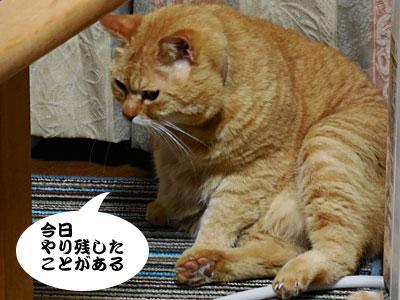 14_03_23_5.jpg