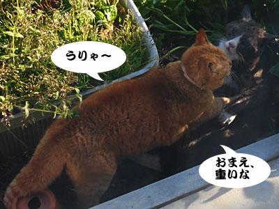 14_03_27_4.jpg