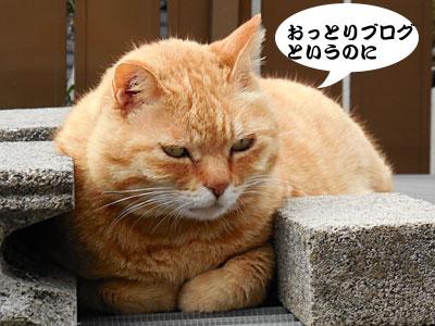 14_03_29_2.jpg