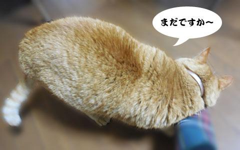 14_04_18_4.jpg