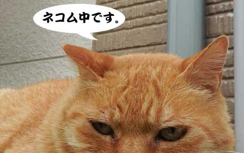14_06_03_2.jpg