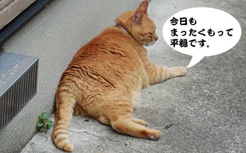 14_06_11_3.jpg