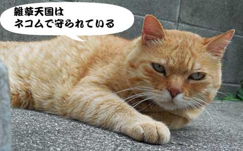 14_06_11_4.jpg