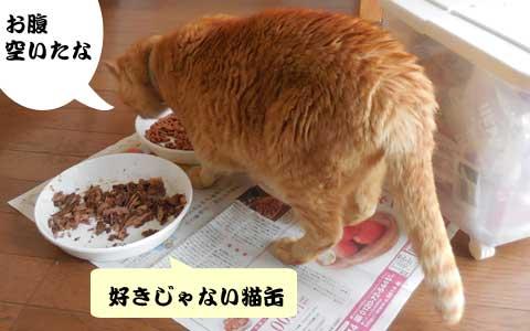 14_06_15_3.jpg