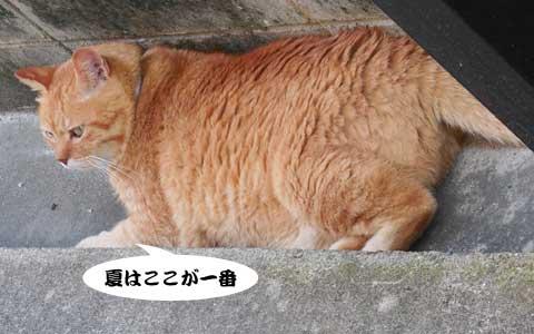 14_07_16_4.jpg