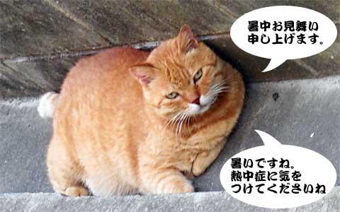14_07_26_5.jpg